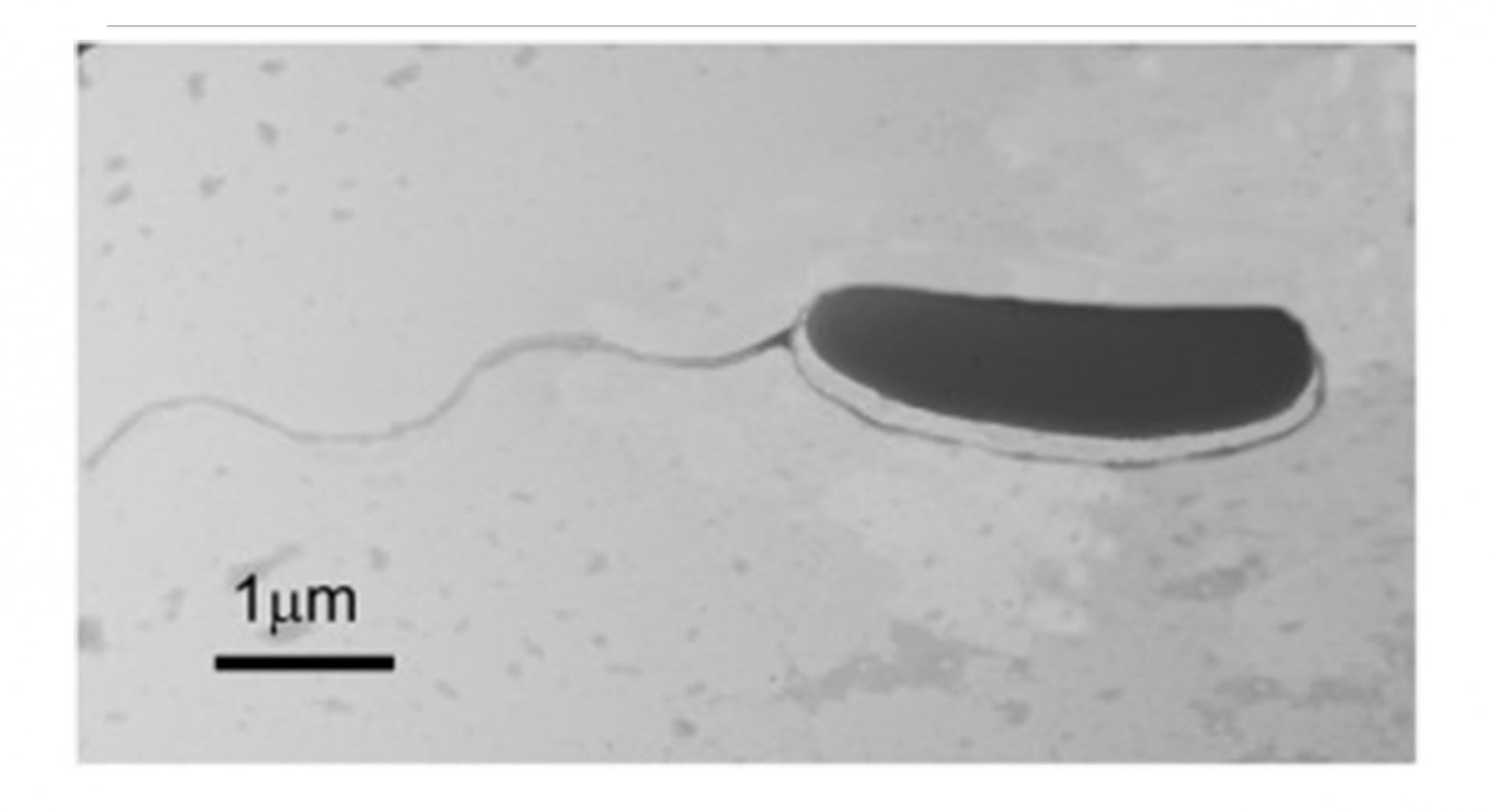 BUÜ'lü akademisyenler yeni bir bakteri türü keşfetti