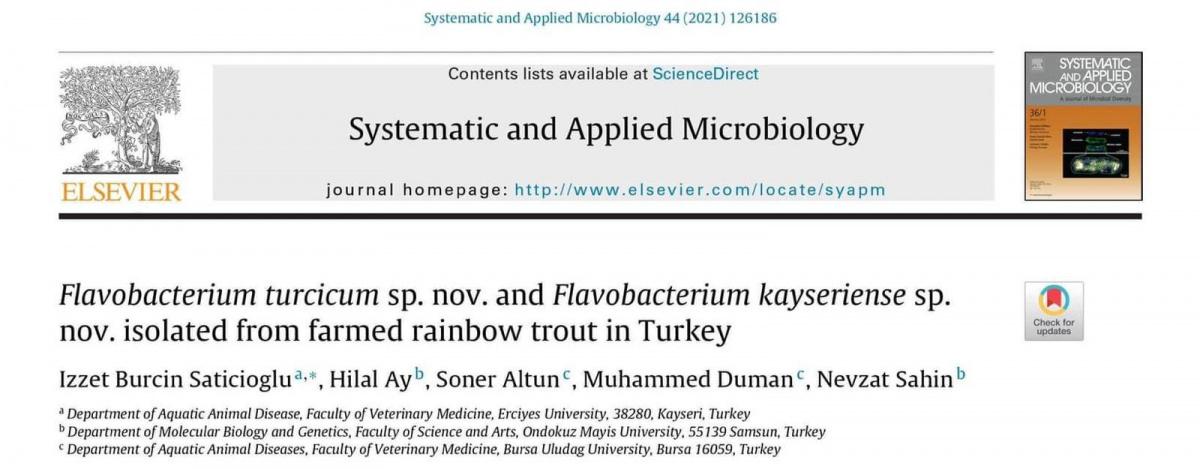 İki yeni bakteri türü keşfedildi