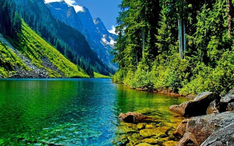 21-26 Mart Dünya Orman Haftası Kutlu Olsun